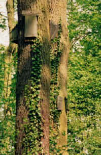 bat boxes at Coombe Country Park